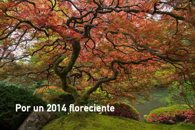japanesse-tree-2014